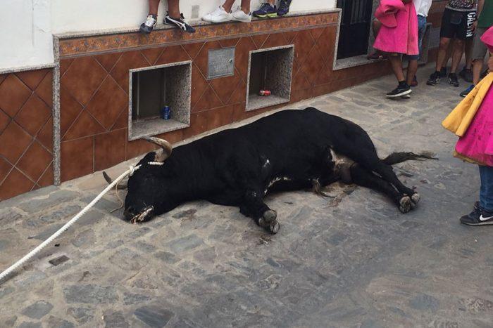 Toro del Gayumbo